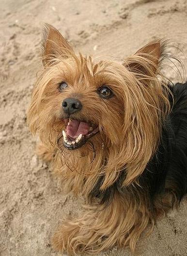 Dogs | Know Them Throu...